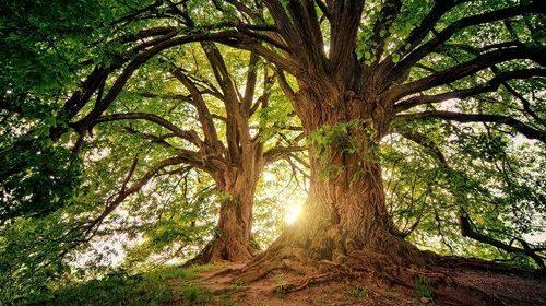 Skogens stärkande hälsoeffekter